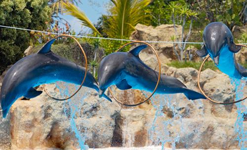 پارک دلفین های هتل نمو-اودسا